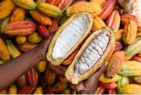 KOKO Cacao
